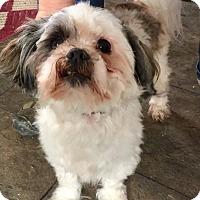 Adopt A Pet :: Sparky - Hillsboro, IL