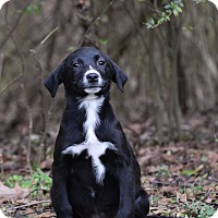 Adopt A Pet :: Jo - Groton, MA