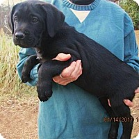 Adopt A Pet :: BUTCH - Lincolndale, NY