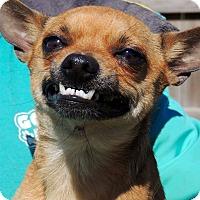 Adopt A Pet :: Frazier - Joplin, MO