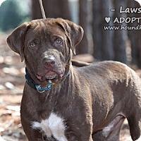 Adopt A Pet :: Lawson - Minneola, FL