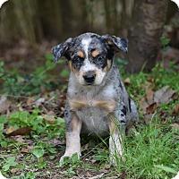 Adopt A Pet :: Nick - Groton, MA