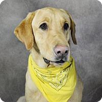 Adopt A Pet :: Baxter - St. Louis Park, MN