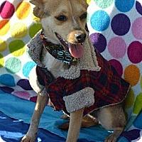 Adopt A Pet :: Micky - San Diego, CA