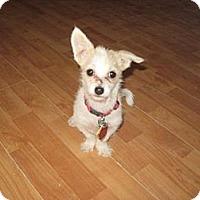 Adopt A Pet :: Honey - Golden Valley, AZ