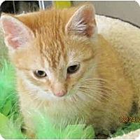 Adopt A Pet :: Rusty - Catasauqua, PA