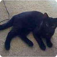 Adopt A Pet :: Stella - Davis, CA