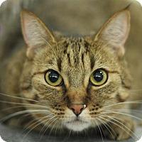 Adopt A Pet :: Penny - Sacramento, CA