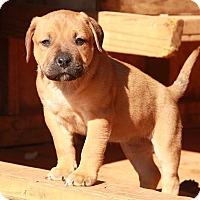 Adopt A Pet :: Donna - Staunton, VA