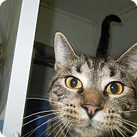 Adopt A Pet :: Beauty - Medina, OH
