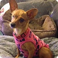 Adopt A Pet :: Daleen - Gainesville, FL