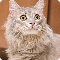 Adopt A Pet :: Fluffy - Chicago, IL