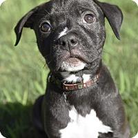 Adopt A Pet :: Luigi - PORTLAND, ME