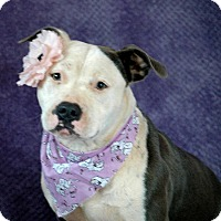 Adopt A Pet :: Bella - Lawrenceville, GA