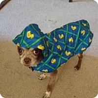 Adopt A Pet :: Huxley - Oakland, CA