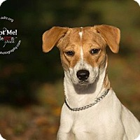 Adopt A Pet :: Queenie - Warsaw, IN