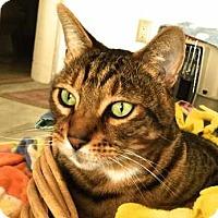 Adopt A Pet :: Kobi - Davis, CA