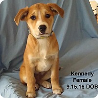Adopt A Pet :: Kennedy-pending adoption - Manchester, CT