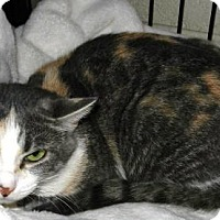 Adopt A Pet :: Momma Cat - Courtesy Post - Rootstown, OH