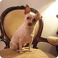 Adopt A Pet :: Mr. Wigglebum - Gaithersburg, MD