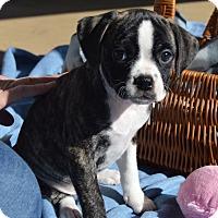 Adopt A Pet :: PAMELA-ADOPTED - East Windsor, CT
