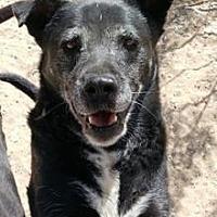 Adopt A Pet :: Lily - El Cajon, CA