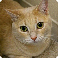 Adopt A Pet :: Taylor Swift - Casa Grande, AZ