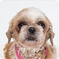 Adopt A Pet :: Sassy - San Luis Obispo, CA