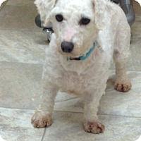 Adopt A Pet :: Betty - Urbana, OH