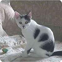 Adopt A Pet :: Aggie & Angie - Chesapeake, VA