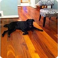 Adopt A Pet :: Seana - Alexandria, VA