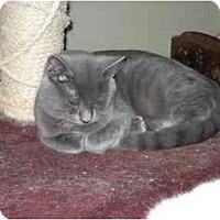 Adopt A Pet :: Itemis Mufasa - Terre Haute, IN