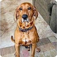 Adopt A Pet :: DAN - Phoenix, AZ