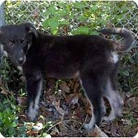 Adopt A Pet :: Lee - Belleville, MI