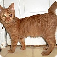 Adopt A Pet :: Fiji - Chattanooga, TN