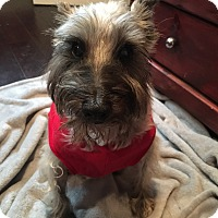 Adopt A Pet :: Danzig - San Diego, CA