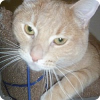 Adopt A Pet :: Cash - Hamburg, NY