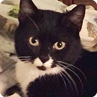 Adopt A Pet :: Bootsie - Walworth, NY