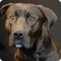 Adopt A Pet :: Ox - Newland, NC