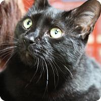 Adopt A Pet :: Deaglan - Sarasota, FL