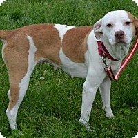 Adopt A Pet :: Pippy - Akron, OH