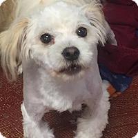 Adopt A Pet :: Dudley - Warner Robins, GA