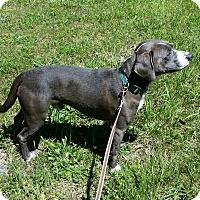 Adopt A Pet :: LD - Crocker, MO