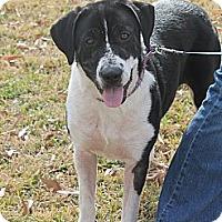 Adopt A Pet :: Marker - Vidor, TX