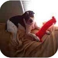 Adopt A Pet :: Otto - Glen Burnie, MD
