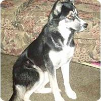 Adopt A Pet :: Raja - Belleville, MI