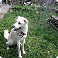 Adopt A Pet :: Nate - Sacramento, CA