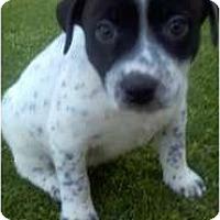 Adopt A Pet :: Dr. Phil - Bakersfield, CA