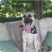 Adopt A Pet :: Ryka - Green Cove Springs, FL