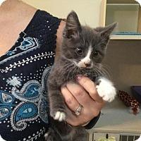 Adopt A Pet :: JENNY - Hamilton, NJ